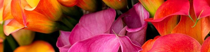 Ramos de flores para el tanatorio de la Paz. Envíos urgentes.
